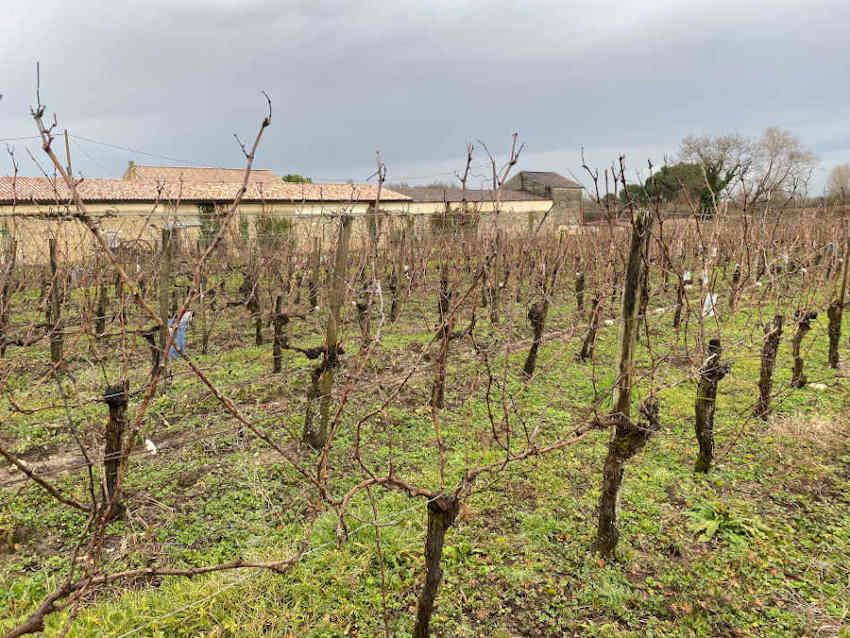 Propriété viticole de 17 ha à acheter
